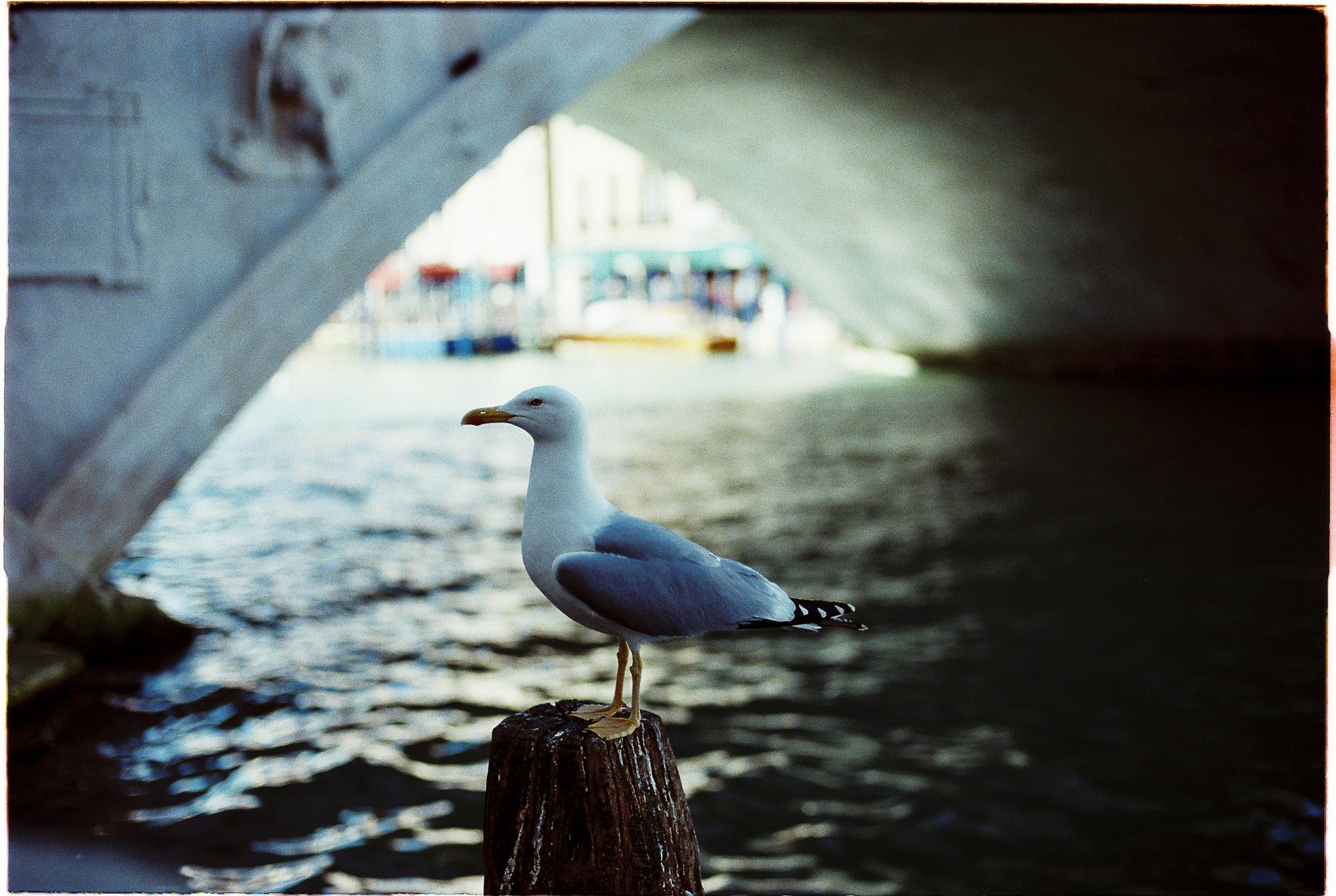 Gull in Venice Grand canal expired film agfa vista 100
