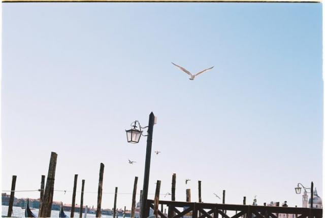 venice gulls - Kodak Ektar 100